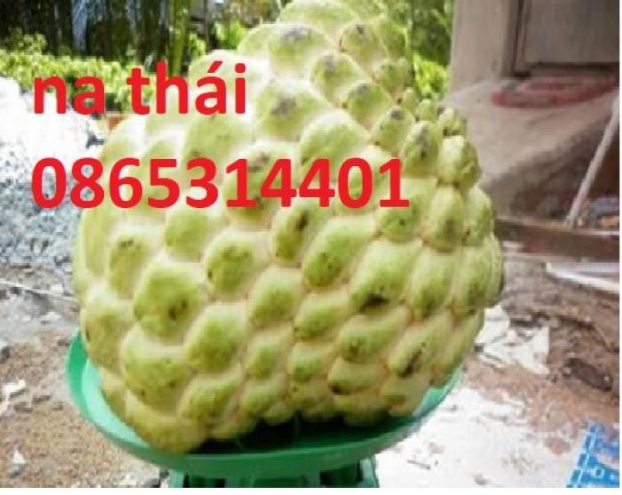 Cung cấp giống cây na Thái Lan quả to khủng 1kg 1 quả. cây trồng tiềm năng lớn1
