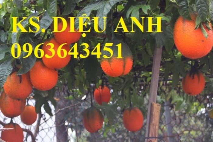 Cung cấp cây giống gấc: Gấc lai cao sản, gấc nếp đỏ, gốc Thái cao sản, chuẩn giống, giá tốt, uy tín9
