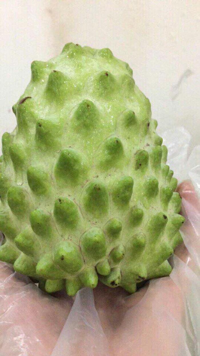 Cây giống ăn quả nhập khẩu, cây na đài loan, giống cây na0