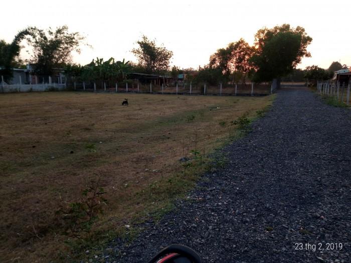 Đất Thổ Cư 64m X 93m Đường Nhựa 702  Ấp Bình Thượng  Thuộc Xã Thái Mỹ Huyện Củ Chi.