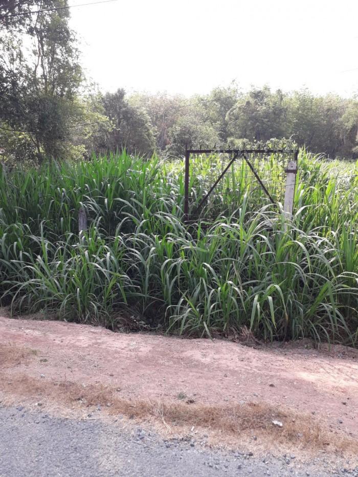 Đất 29m x 78m  mặt tiền đường nhựa cây trắc xã Phú Hòa Đông , Củ Chi.