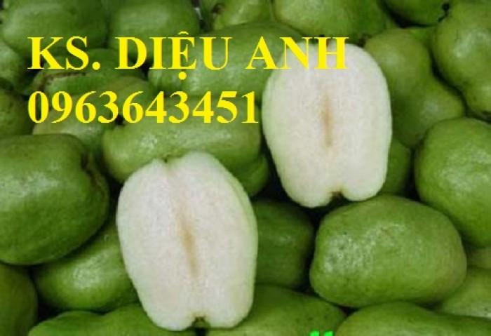 Cung cấp cây ổi giống: ổi nữ hoàng, ổi Thái Lan, ổi lê Đài Loan, ổi không hạt, năng suất cao, chất lượng tốt10