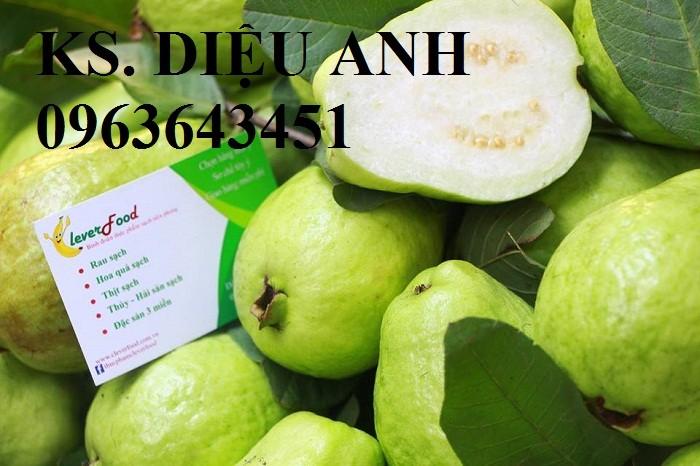 Cung cấp cây ổi giống: ổi nữ hoàng, ổi Thái Lan, ổi lê Đài Loan, ổi không hạt, năng suất cao, chất lượng tốt8