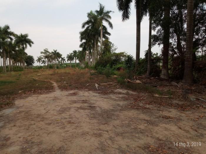 Đất Mặt Tiền 27m X 144m Đường Nhựa Cây Bài Ấp Phú Hiệp Xã Phú Hòa Đông ,Củ Chi.