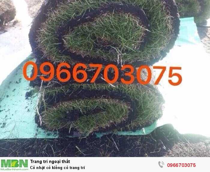 Cỏ nhật cỏ kiểng cỏ trang trí