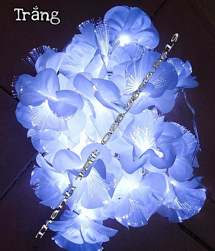 Hoa cước led phát sáng0