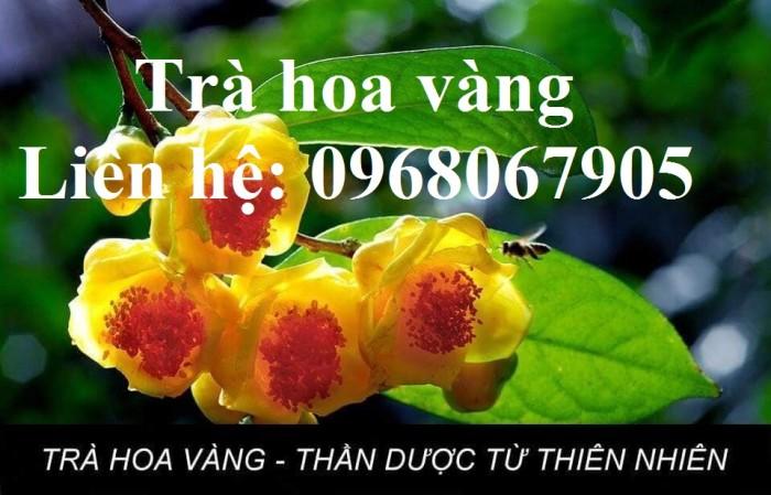 Cung cấp giống cây trà hoa vàng, giống giâm hom cam kết chất lượng7