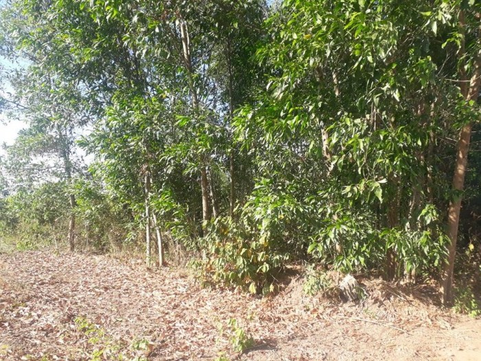 Bán 2.2 mẫu đất - chính chủ - đường vào Vingroup