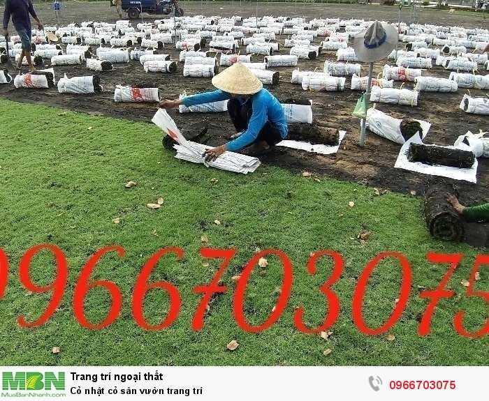 Cỏ Nhật cỏ sân vườn trang trí