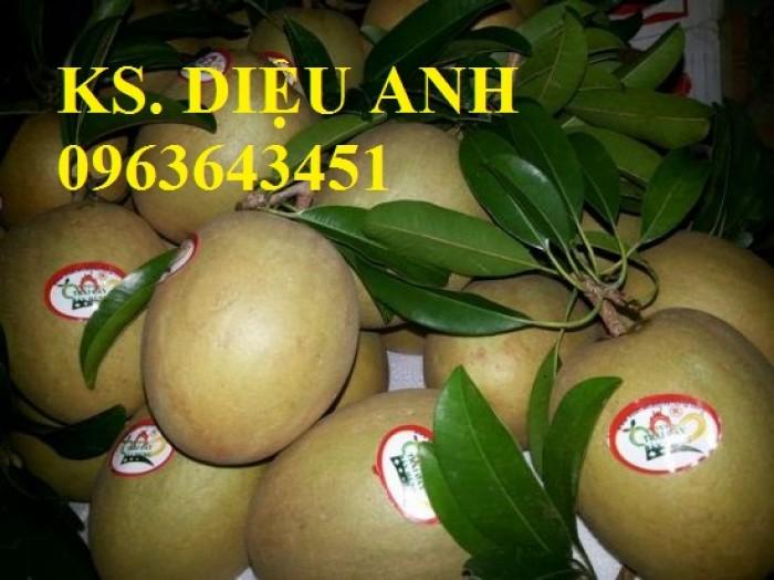 Cung cấp cây giống hồng xiêm xoài quả to, hồng xiêm ruột đỏ khổng lồ Thái Lan, giống sapoche Thái13