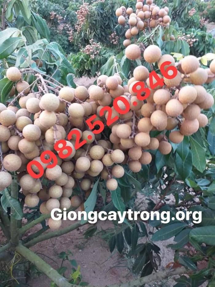 Nhãn Hương Chi - Nhãn Ngon - Chuẩn - Hvnn Việt Nam2