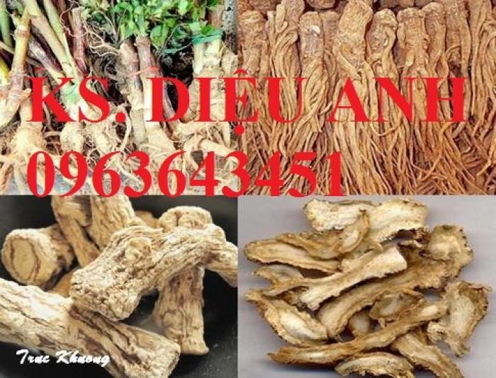Cung cấp cây giống, hạt giống sâm dược liệu sâm bố chính, sâm đương quy, sâm ngọc linh chuẩn, uy tín14