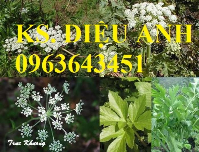 Cung cấp cây giống, hạt giống sâm dược liệu sâm bố chính, sâm đương quy, sâm ngọc linh chuẩn, uy tín17