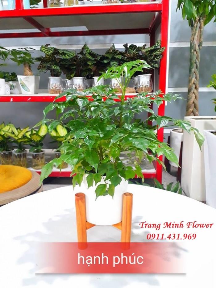 Cây văn phòng, bonsai mini, chất lượng cao.7