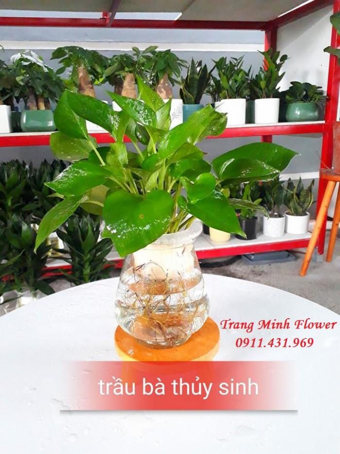 Cây văn phòng, bonsai mini, chất lượng cao.4