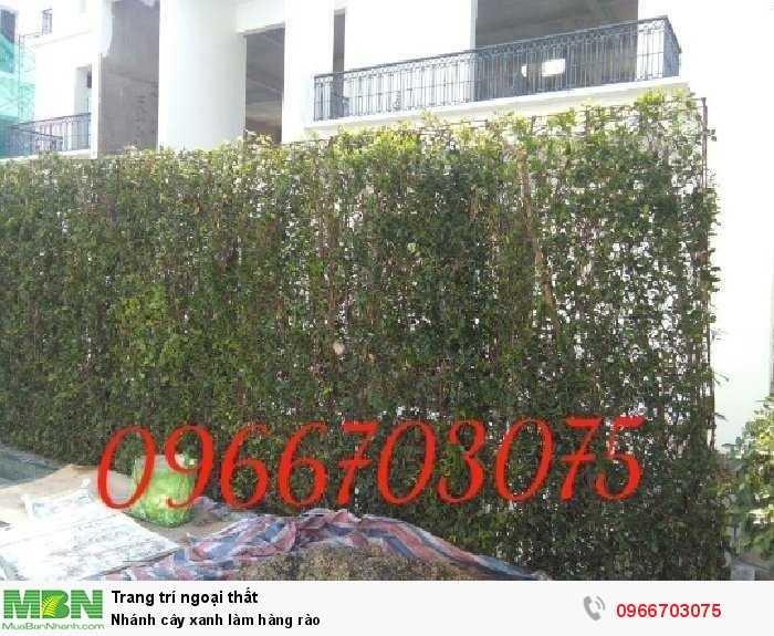 Nhánh cây xanh làm hàng rào
