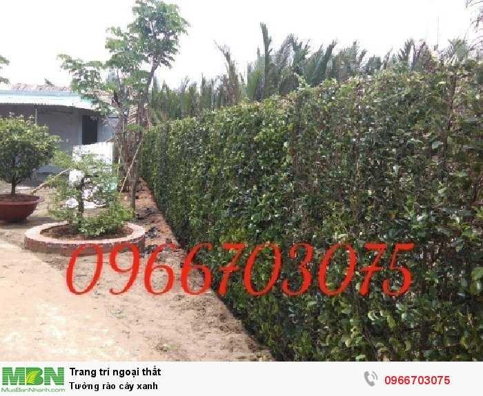 Tường rào cây xanh