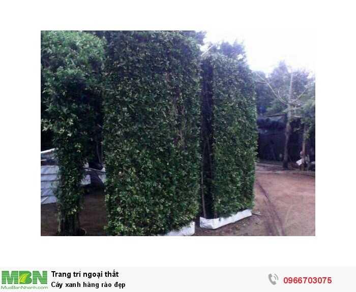 Cây xanh hàng rào đẹp