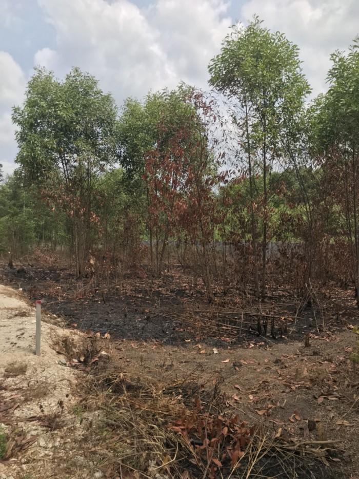 Bán đất nền Long Phước gần trục đường Bàu Cạn.