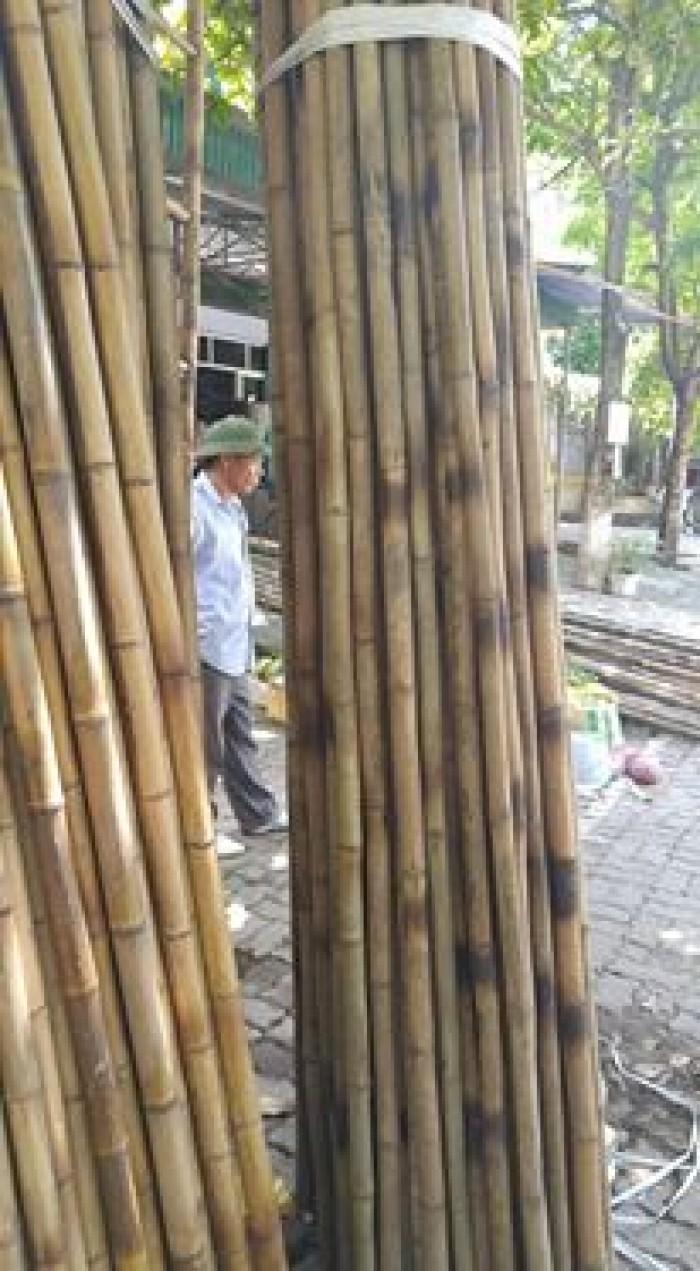 Nhận cung cấp các loại cây trúc, cây tre, câp hóp tại khu vực Hà Nội với giá ưu đãi! Liên hệ: Mr Năm 0912 988 057