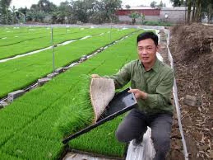Khay gieo mạ dùng trong máy cấy Phú hòa an1