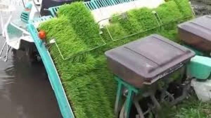 Khay gieo mạ dùng trong máy cấy Phú hòa an0