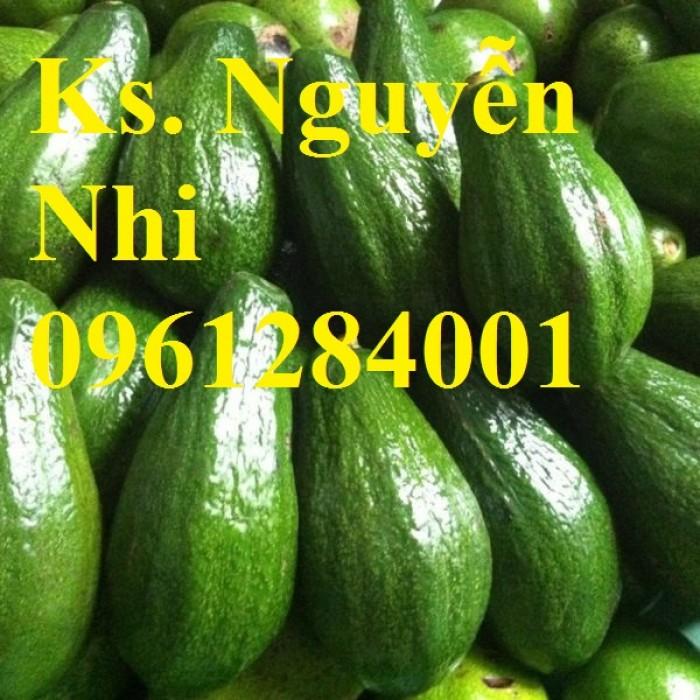 Cung cấp các loại giống cây bơ, bơ booth, bơ sáp, bơ 034, cây giống bơ uy tín, chất lượng5