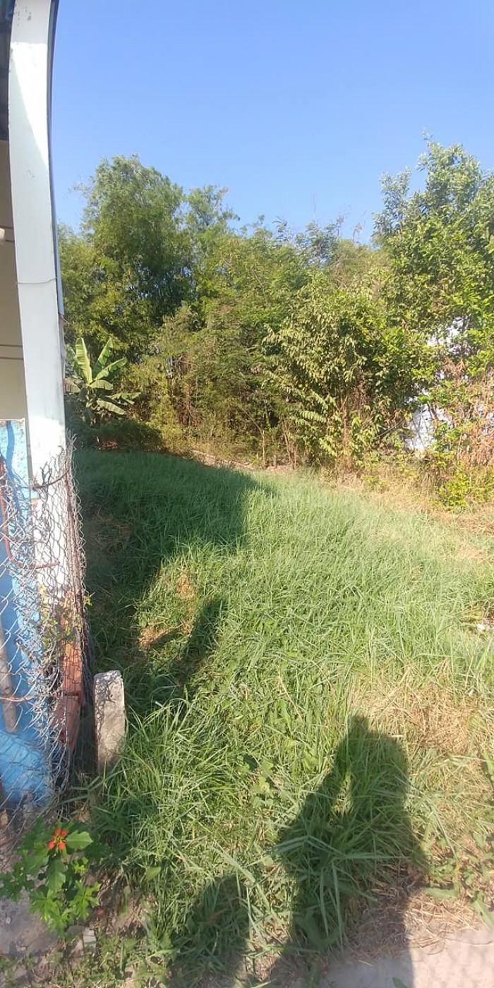 Đất nền TC 82m2 cách đường bờ miễu ấp Thanh Ba Cần Giuộc đúng 30m