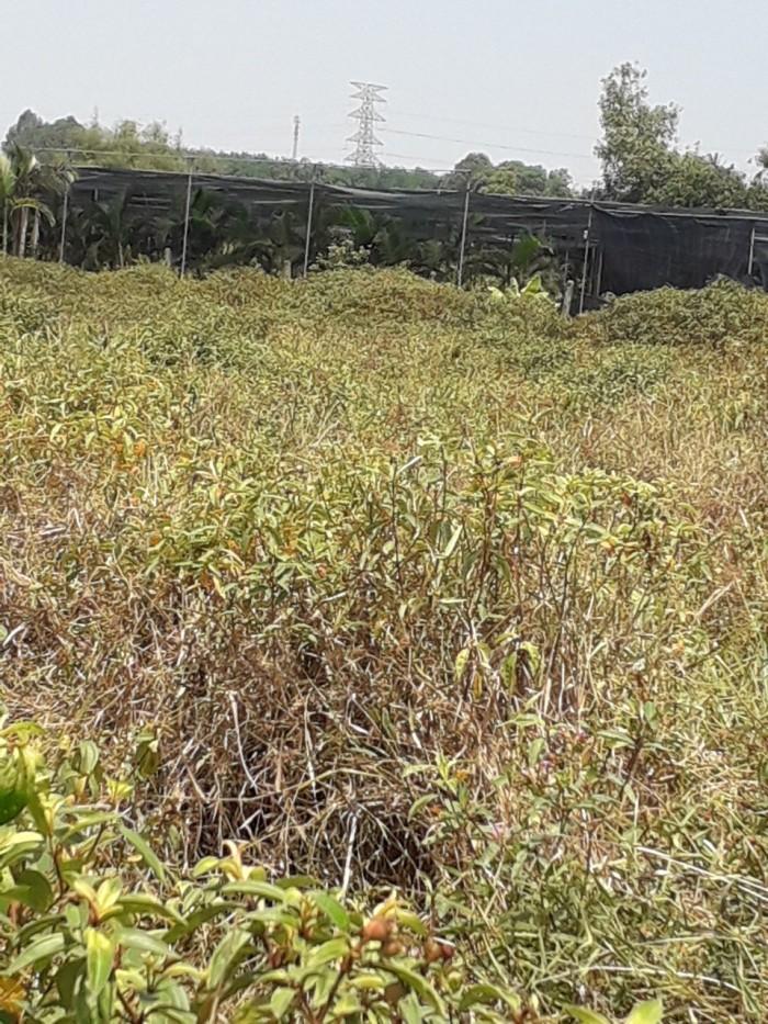 Đất 20x75m đường Nguyễn Thị Nê