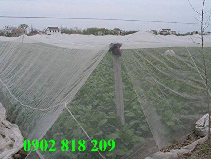 Lưới chắn côn trùng quây vườn rau sạch9