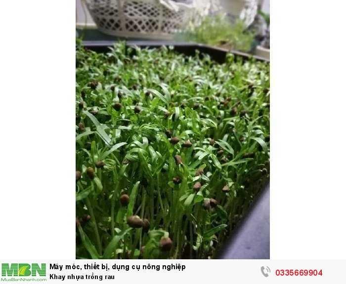 Khay nhựa trồng rau1