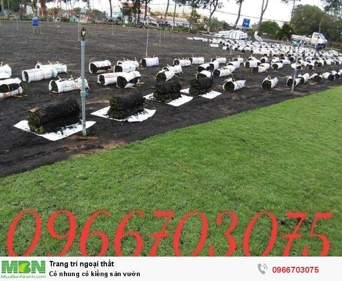 Cỏ nhung cỏ kiểng sân vườn1