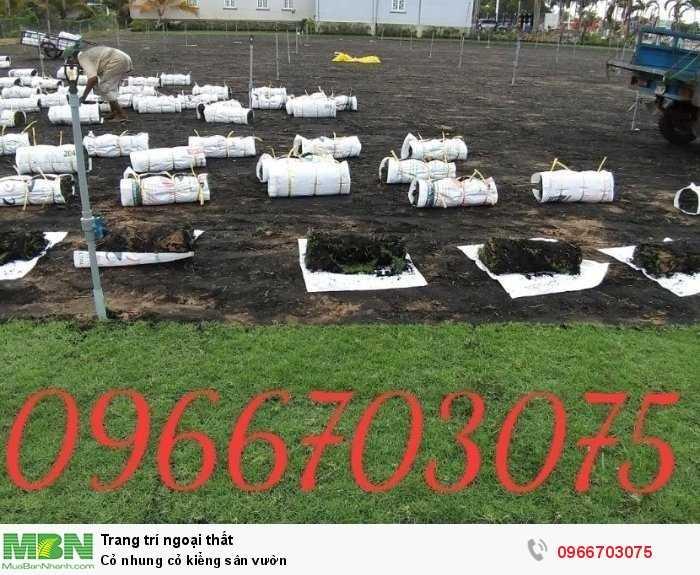 Cỏ nhung cỏ kiểng sân vườn2