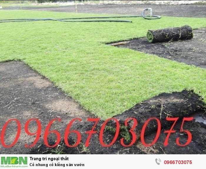 Cỏ nhung cỏ kiểng sân vườn3