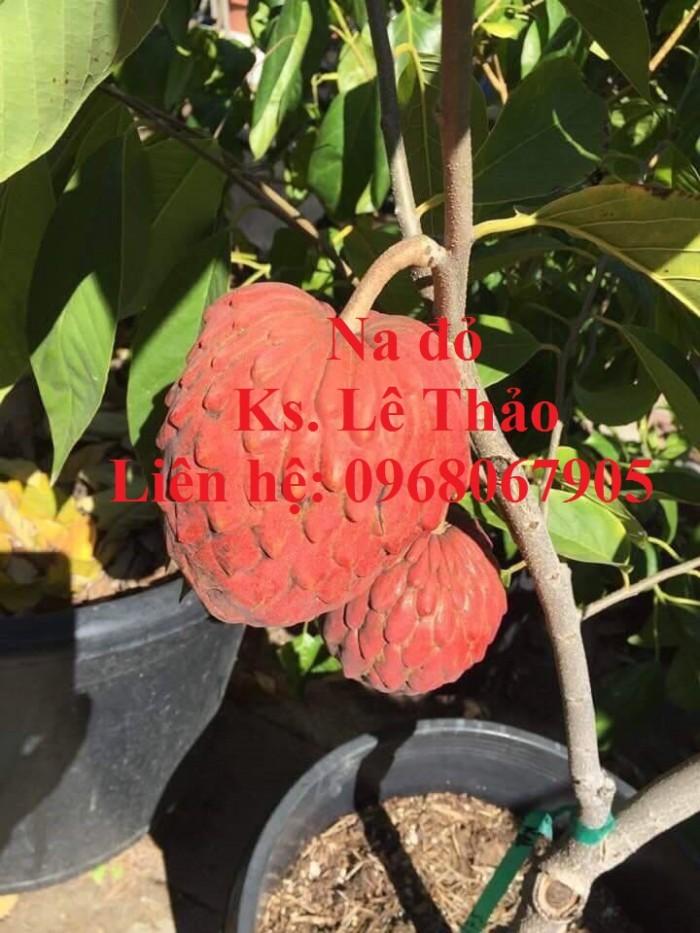 Cung cấp giống cây độc lạ,giống Na đỏ Úc, Na Úc, Na đỏ. Hàng nhập khẩu, chuẩn F12