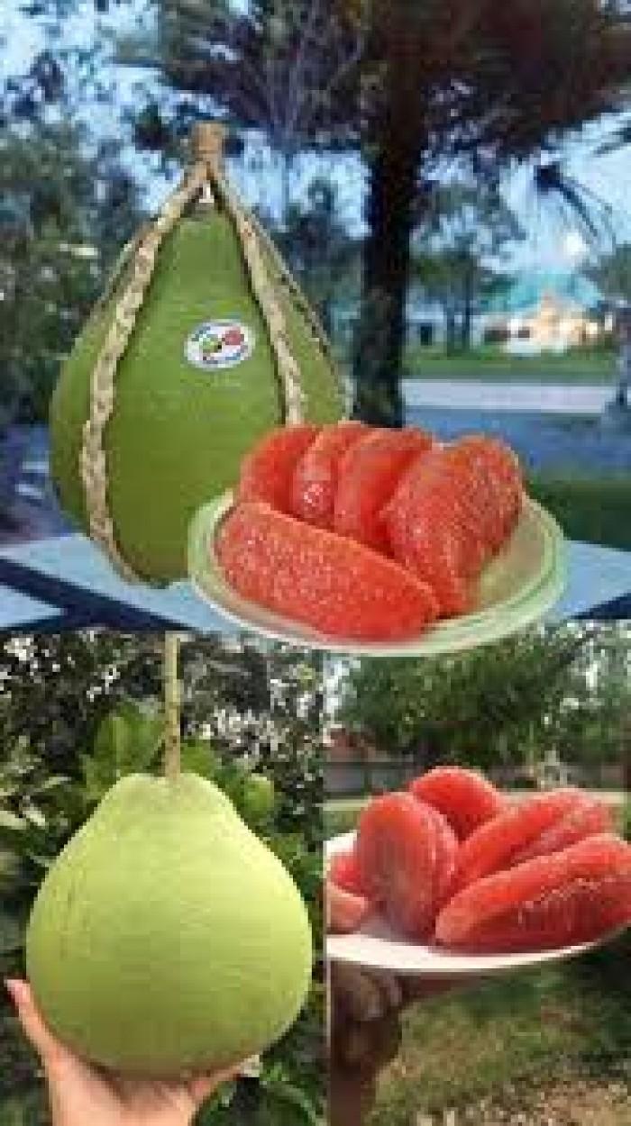 Bưởi ruby Thái Lan-Cung cấp giống BƯỞI RUBY THÁI LAN. Giống cây được nhập khẩu trực tiếp từ Thái Lan0