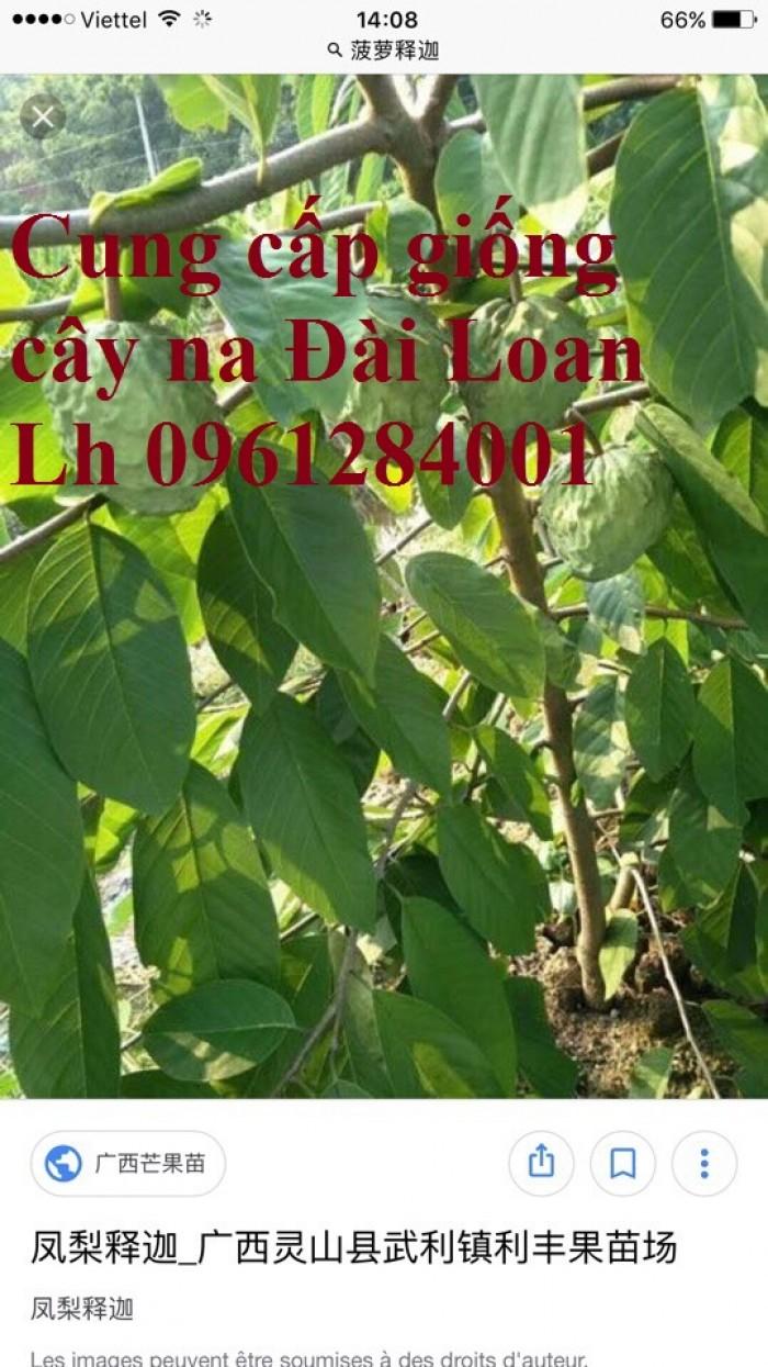 Trồng cây na đài loan, na dai đài loan, na bở đài loan, na dứa, cây giống nhập khẩu đầu nguồn, cam kết chất lượng0