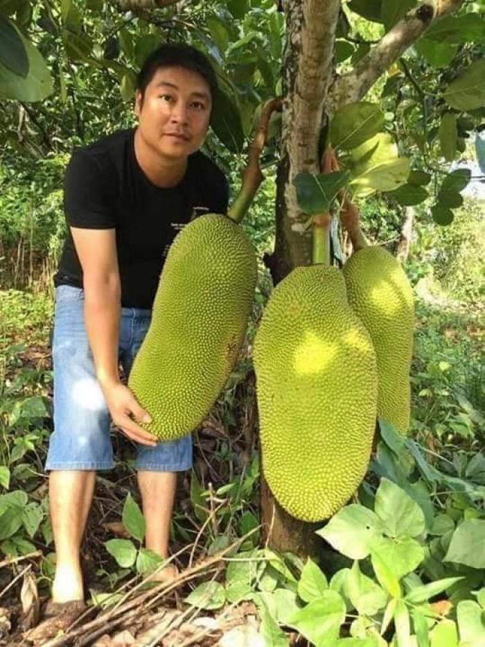 mít trái dài malaysia2