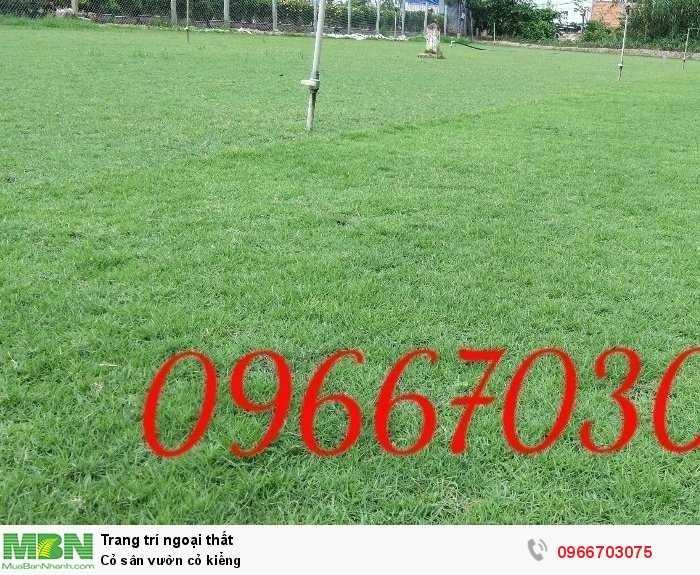 Cỏ sân vườn cỏ kiểng2