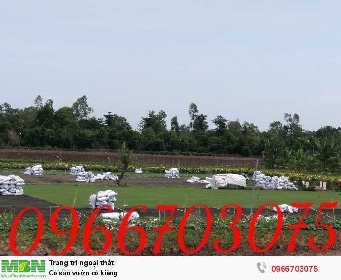 Cỏ sân vườn cỏ kiểng4