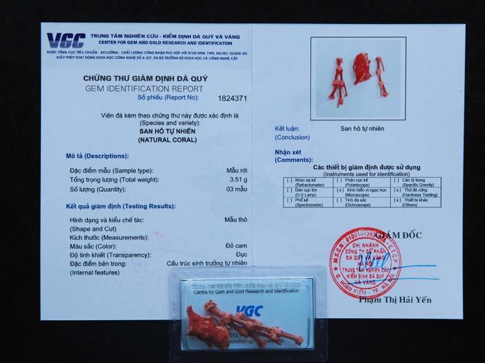 San hô đỏ tự nhiên được kiểm định chất lượng tại VGC7
