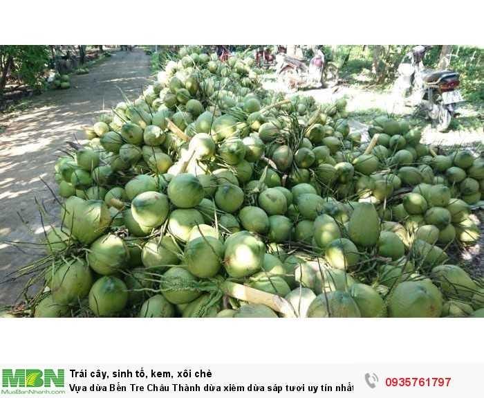 Vựa dừa Bến Tre Châu Thành dừa xiêm dừa sáp tươi uy tín nhất Sài Gòn2