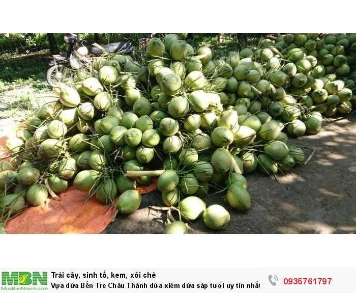 Vựa dừa Bến Tre Châu Thành dừa xiêm dừa sáp tươi uy tín nhất Sài Gòn3