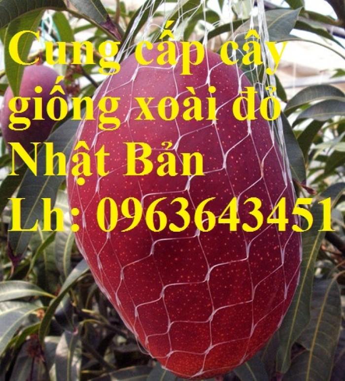 Cung cấp cây giống xoài đỏ Nhật Bản, xoài Nhật trứng mặt trời, xoài đỏ Đài Loan, xoài ruby nhật khẩu5