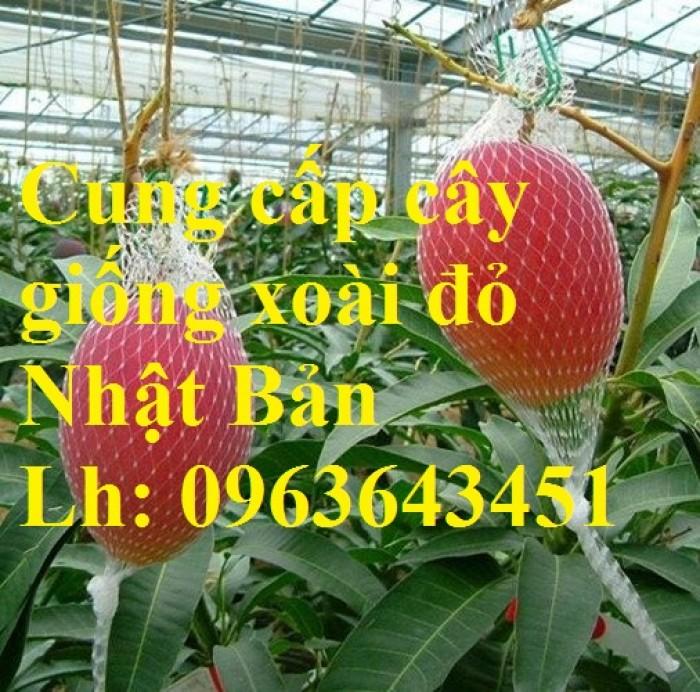 Cung cấp cây giống xoài đỏ Nhật Bản, xoài Nhật trứng mặt trời, xoài đỏ Đài Loan, xoài ruby nhật khẩu0