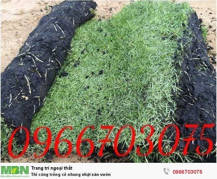 Trồng cỏ nhung Nhật sân vườn0