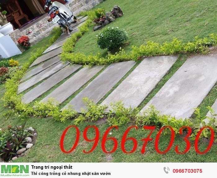 Trồng cỏ nhung Nhật sân vườn2