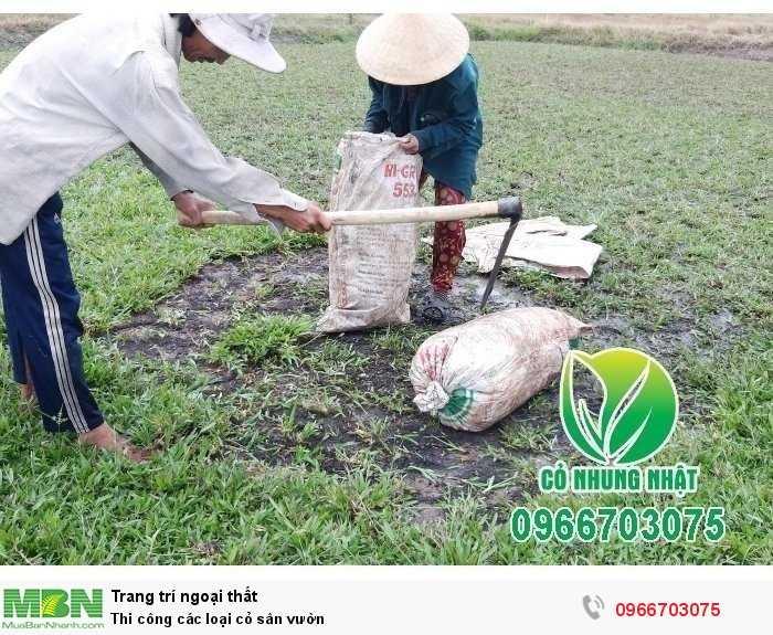 Thi công các loại cỏ sân vườn0