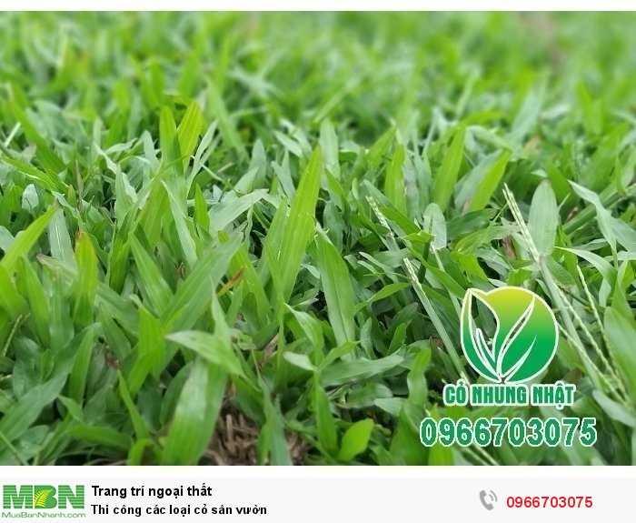 Thi công các loại cỏ sân vườn1