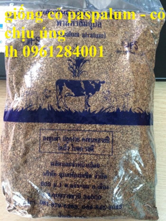 Giống cỏ VA06, hom giống VA06, cỏ ghi nê, cỏ sả, cỏ sữa, số lượng lớn, giao hàng toàn quốc12